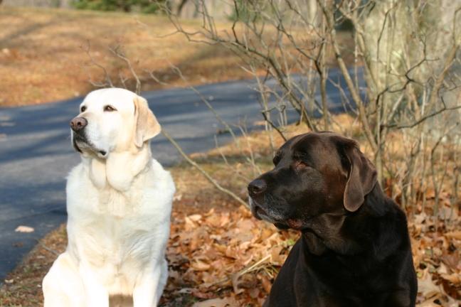 2009-11-21 Hal_s dog pics canon 042